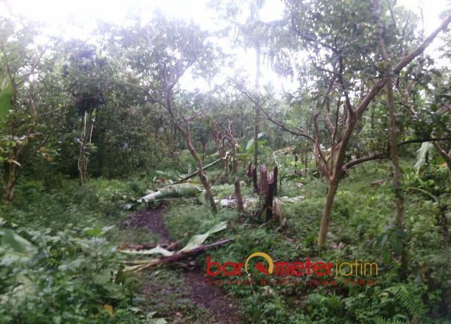 RUSAK LINGKUNGAN: Tak hanya posko yang dirusak, pelaku juga menebangi ratusan pohon yang ditanam sejak 2008. | Foto: Barometerjatim.com/ROY HASIBUAN