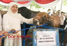 SAPI KURBAN: Khofifah Indar Parawansa menyerahkan sapi kurban di Masjid Al Akbar, Rabu (22/8). | Foto: Barometerjatim.com/MARJAN AP