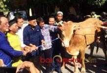 NASDEM KURBAN SAPI: Rendra Kresna dan pengurus Partai Nasdem Jatim menyerahkan sapi ke PWI Jatim untuk kurban, Minggu (19/8). | Foto: Barometerjatim.com/NANTHA LINTANG